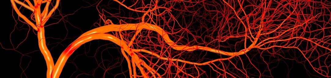 neoangiogenesis_1083x256